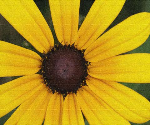 daisycanvas.jpg